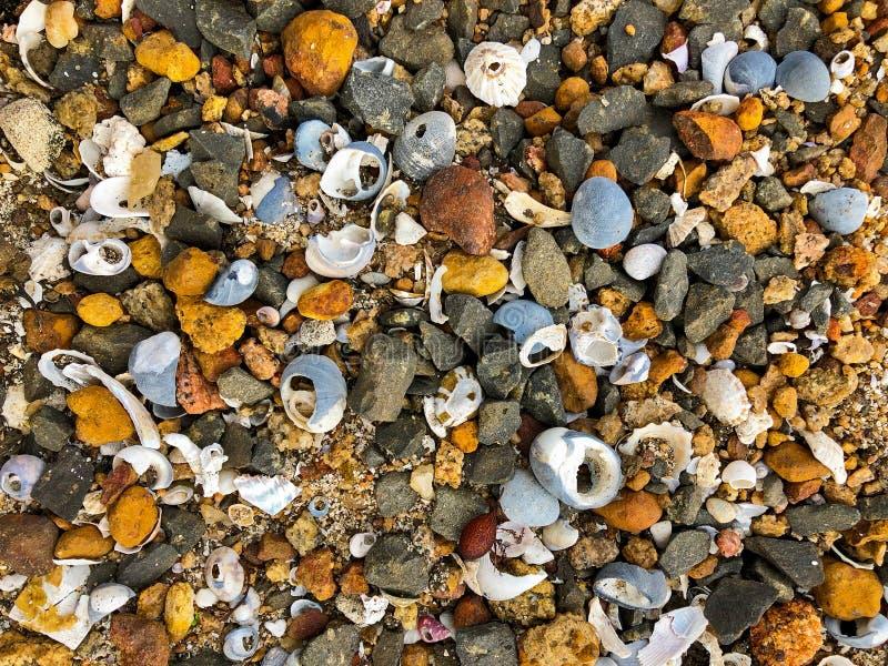 Kleine zeeschelp, rotsen, kiezelstenen op zandig kustgebied door het overzees royalty-vrije stock afbeelding