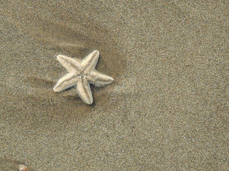 Kleine zeester die op het strand van de zandkust liggen royalty-vrije stock foto's