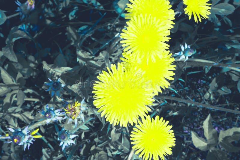 Kleine zonnen op een duidelijke, de lentedag stock fotografie