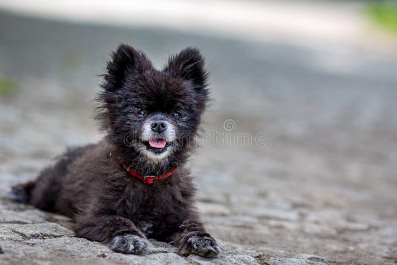 Kleine zwarte dakloze hond die u, Praag bekijken royalty-vrije stock fotografie