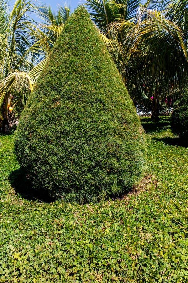 Kleine Zypresse von einem Garten lizenzfreie stockfotografie