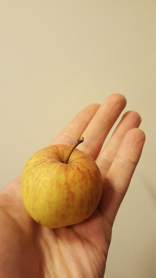 Kleiner Apfel stockbilder