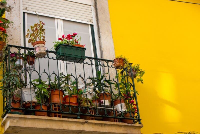 Kleiner Balkon mit Blumentöpfen gegen helle gelbe Wand Traditioneller portugiesischer Entwurf im Freien Straßendekoration in Liss lizenzfreie stockfotografie