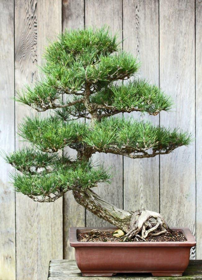 Kleiner Baum lizenzfreie stockfotografie