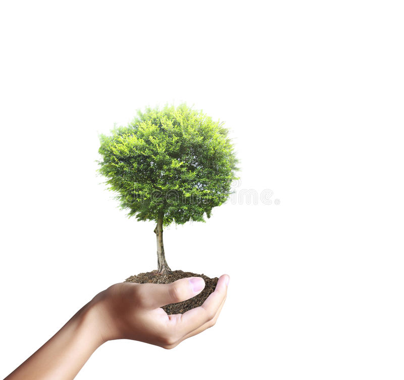 Kleiner Baum, Anlage in der Hand stockbilder