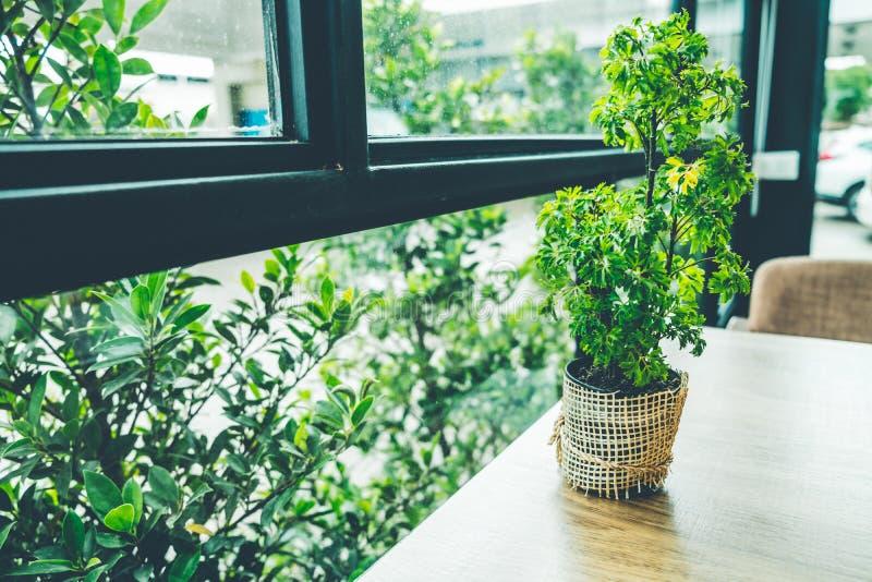 Kleiner Baum auf dem hölzernen Schreibtisch im Kaffeestubeweinlese-Farbton lizenzfreies stockfoto