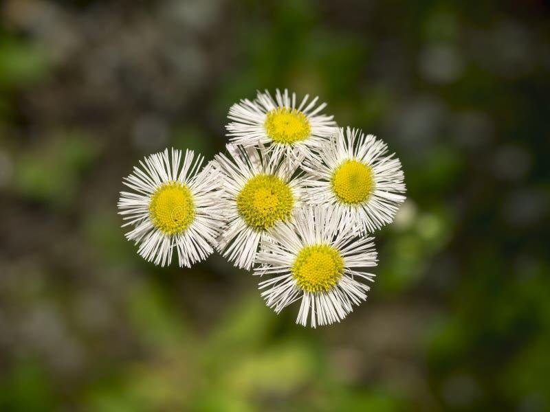 Kleiner Blumenstrauß von Blumen lizenzfreie stockbilder
