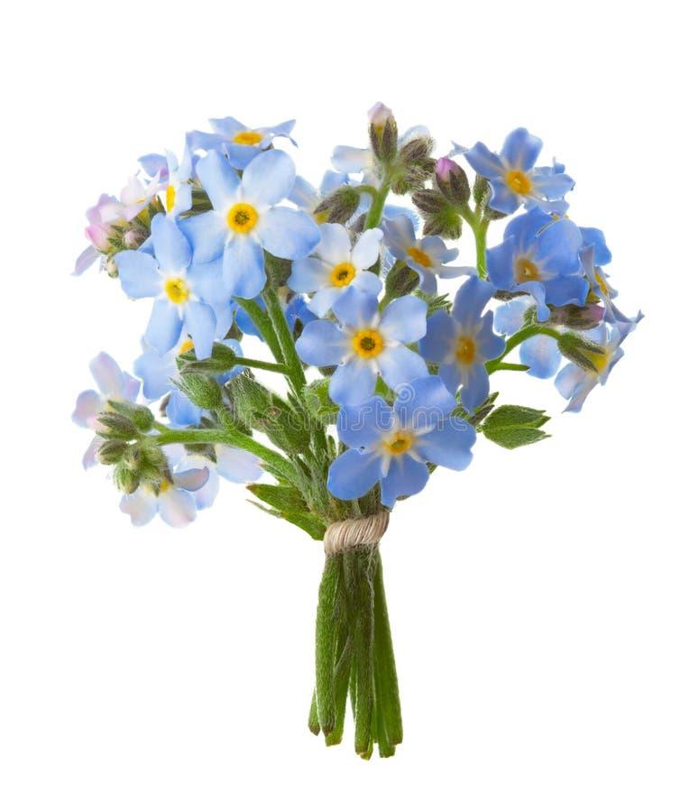 Kleiner Blumenstrauß von den Vergissmeinnichten lokalisiert auf weißem Hintergrund stockbild