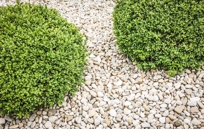 kleiner busch stockfoto bild von eleganz garten busch 30130920. Black Bedroom Furniture Sets. Home Design Ideas