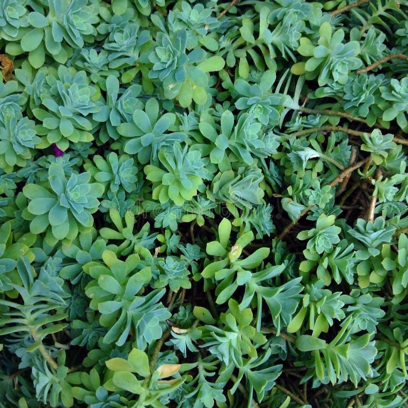 Kleiner Dschungel stockfoto