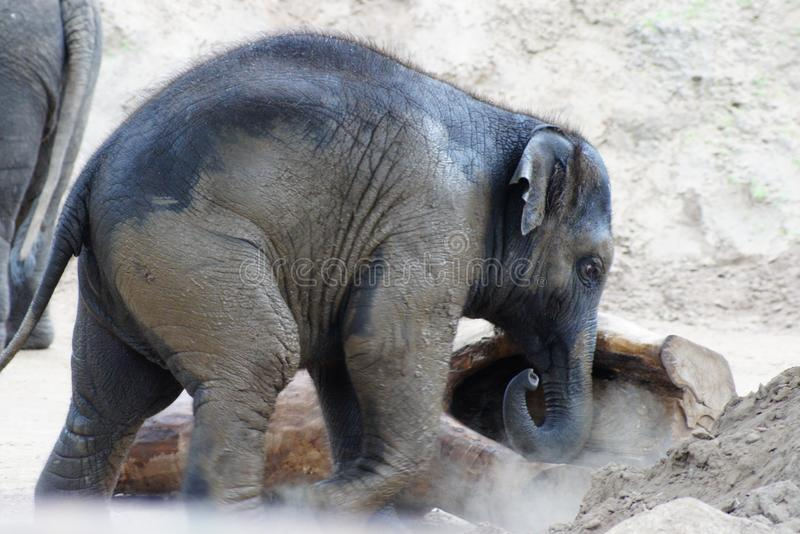 Kleiner Elefant, der Klotz drückt stockfotografie