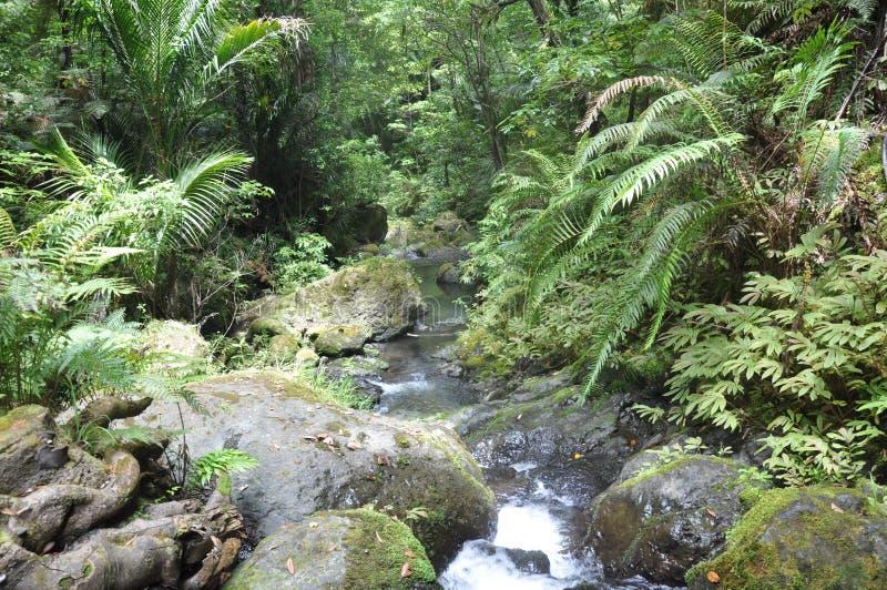 Kleiner Fluss im Wald stockfotos