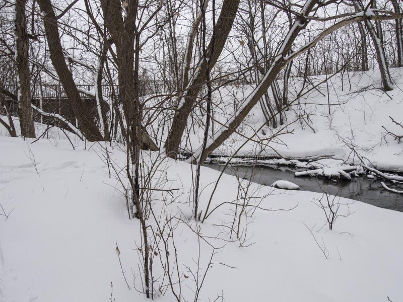 Kleiner Fluss mit Bäumen im Winter lizenzfreies stockfoto