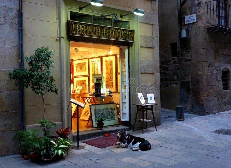 Kleiner freundlicher Hund in einer städtischen Landschaft vor einer Galerie stockfoto
