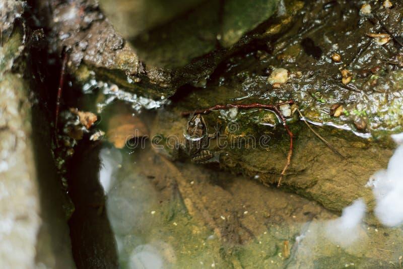 Kleiner Frosch im Teich ein Frosch sitzt an einem kalten Frühling stockfotografie