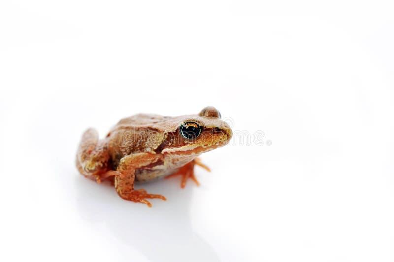 Kleiner Frosch sehr nah oben stockfotos