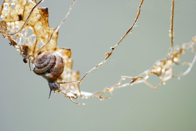 Kleiner Gastropode auf einem kletternden Ausflug in einem trockenen Blatt, Metapher backg lizenzfreie stockfotografie