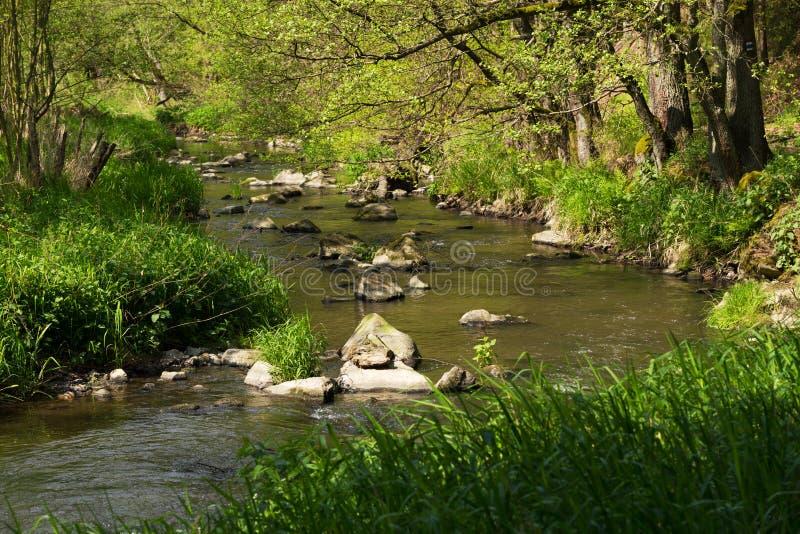 Kleiner Gebirgswilder Fluss im Frühjahr stockfotos