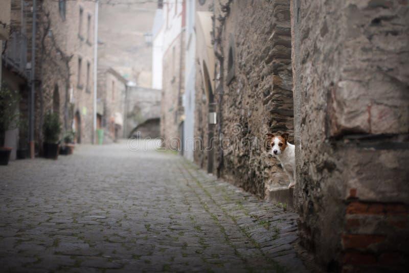Kleiner Hund in der alten Stadt Ein Haustier in der Stadt stockbild
