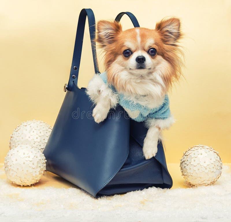 Kleiner Hund in der Tasche lizenzfreie stockbilder