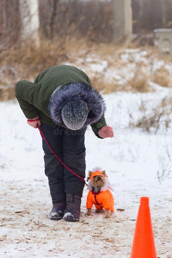 Kleiner Hund führt ergeben Wintertraining durch lizenzfreies stockbild