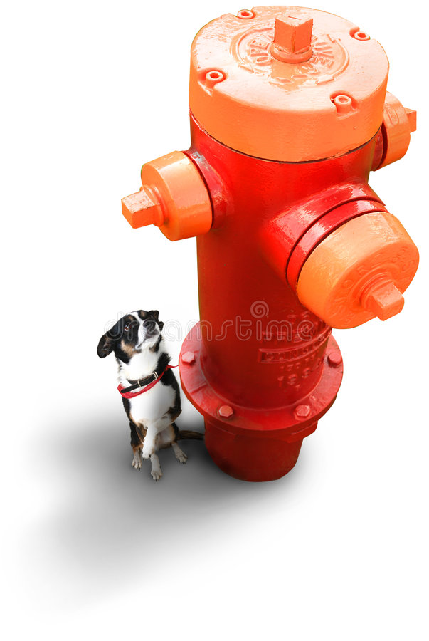 Kleiner Hund am Feuer-Hydranten lizenzfreies stockfoto