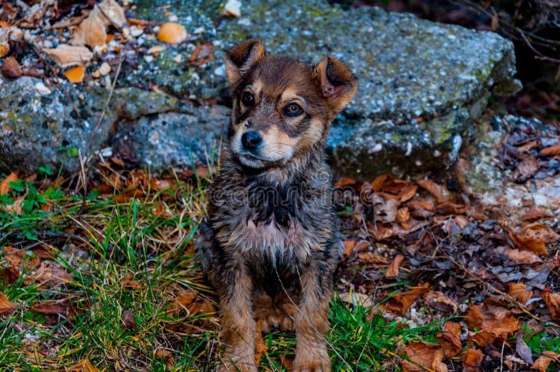 Kleiner Hund im Park stockbild