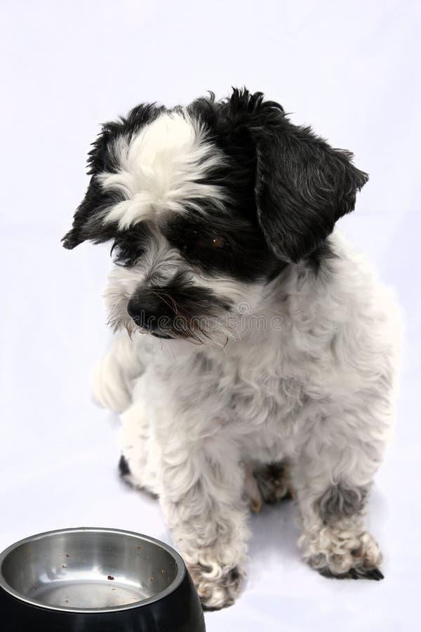 Kleiner Hund und leerer Futternapf lizenzfreies stockfoto
