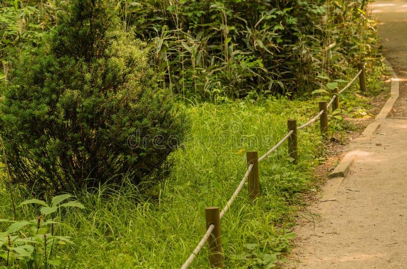 Kleiner immergrüner Baum nahe bei einem gepflasterten Gehweg stockfotografie