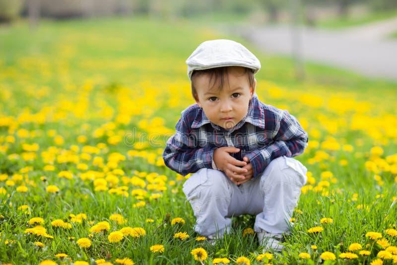 Kleiner Junge auf einem Löwenzahngebiet lizenzfreie stockbilder