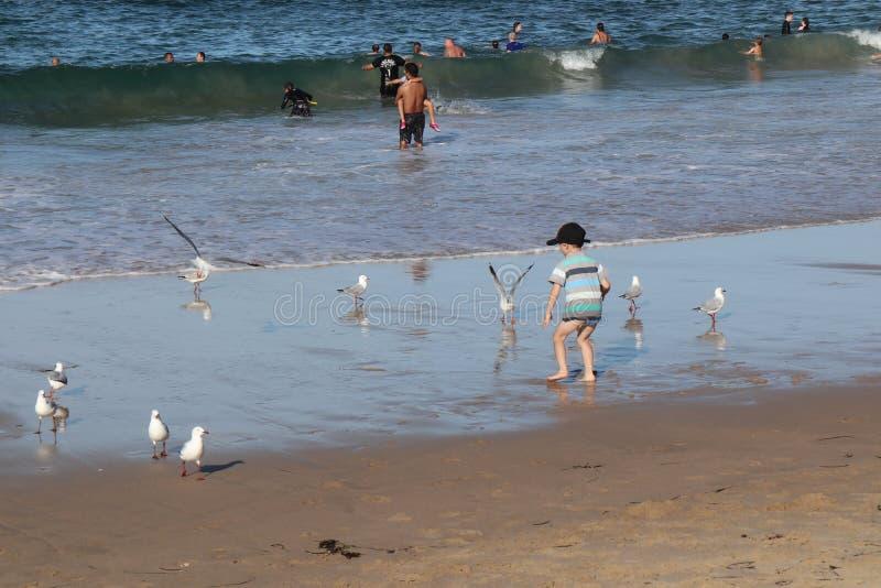 Kleiner Junge Cronulla-Strandes-D gespielt mit den Seemöwen stockbild