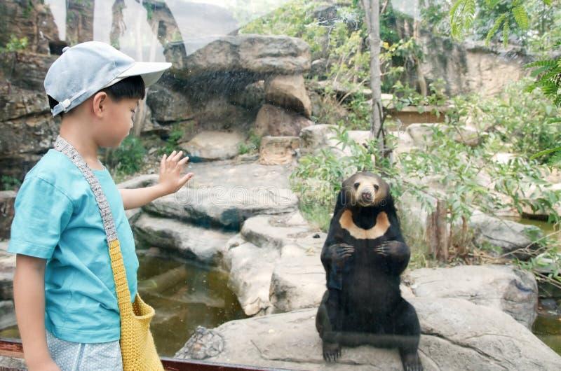 Kleiner Junge, der malaiischen Sonnenbären im Zoo schaut stockbilder