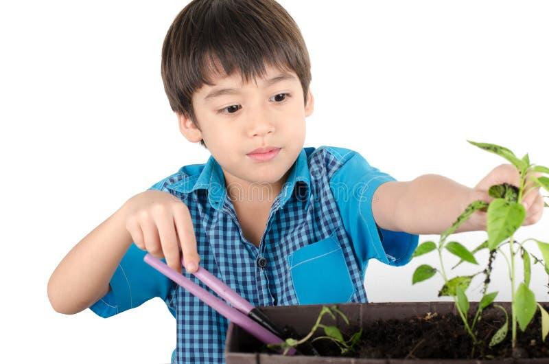 Kleiner Junge, der mit der Gartenarbeit arbeitet stockfoto