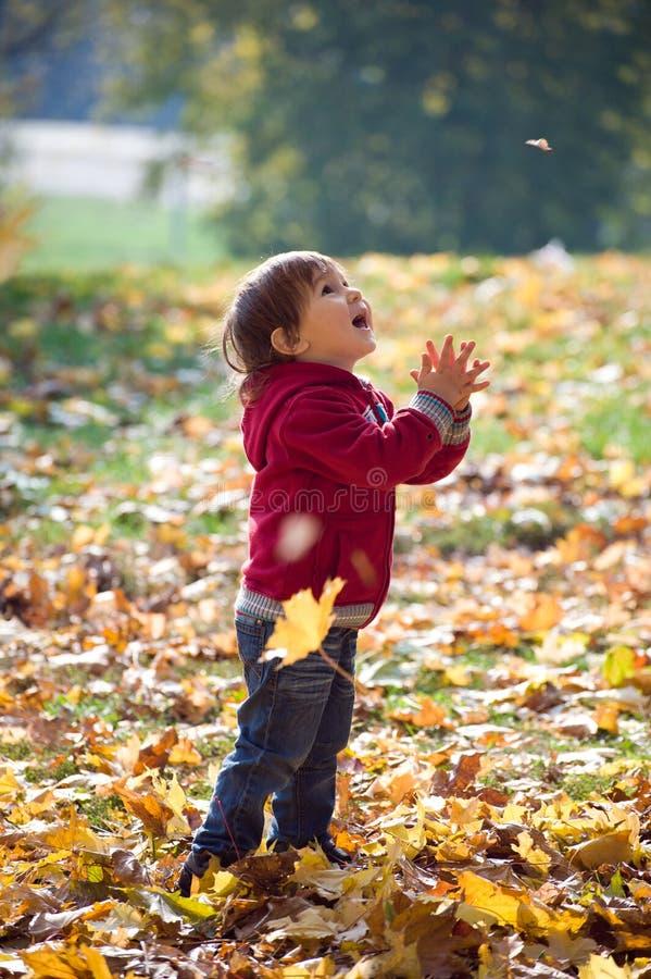 Kleiner Junge, der oben auf einem fallenden Blatt im Wunder schaut lizenzfreies stockbild