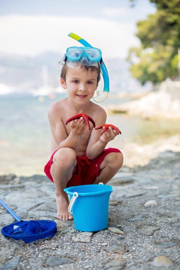 Kleiner Junge, der Rot fünf Punktstarfish und -eimer in seinem Han hält lizenzfreies stockbild