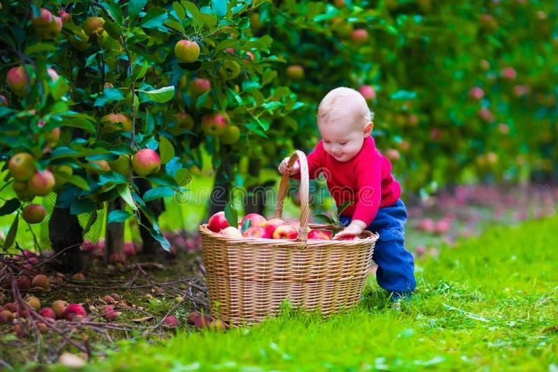 Kleiner Junge mit Apfelkorb auf einem Bauernhof stockbilder