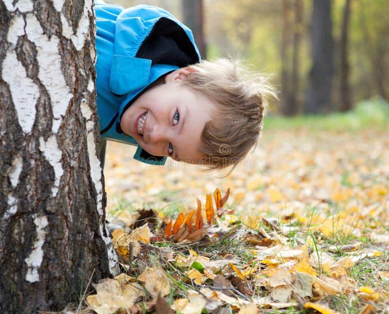 Kleiner Junge schaut aus Birke, Fall, Park heraus lizenzfreies stockbild