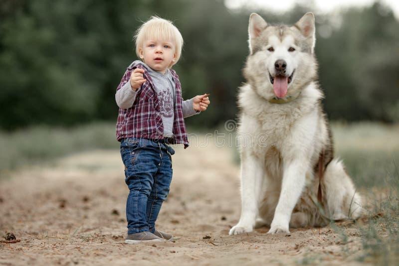 Kleiner Junge steht nahen Malamutehund auf Weg im Wald stockbild