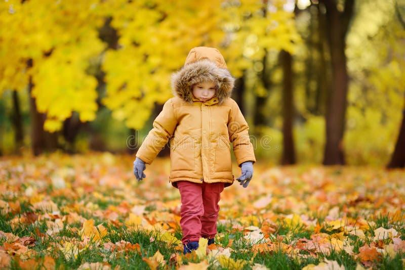 Kleiner Junge während des Spaziergangs im Wald am sonnigen Herbsttag stockbild