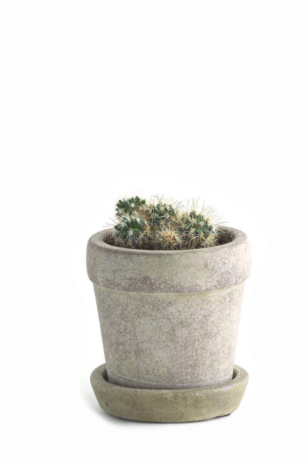 Kleiner Kaktus lizenzfreies stockfoto