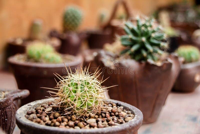 kleiner Kaktus auf Tabelle stockbild
