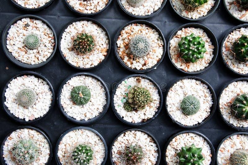 Kleiner Kaktus in den schwarzen Töpfen, wenige Wüstenpflanzen lizenzfreie stockbilder