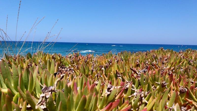 Kleiner Kaktus, der das Meer übersieht stockfoto