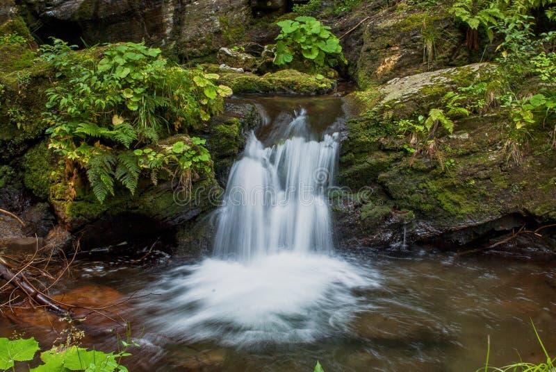 Kleiner Kaskadenwasserfall im ?ppigen Wald stockfoto