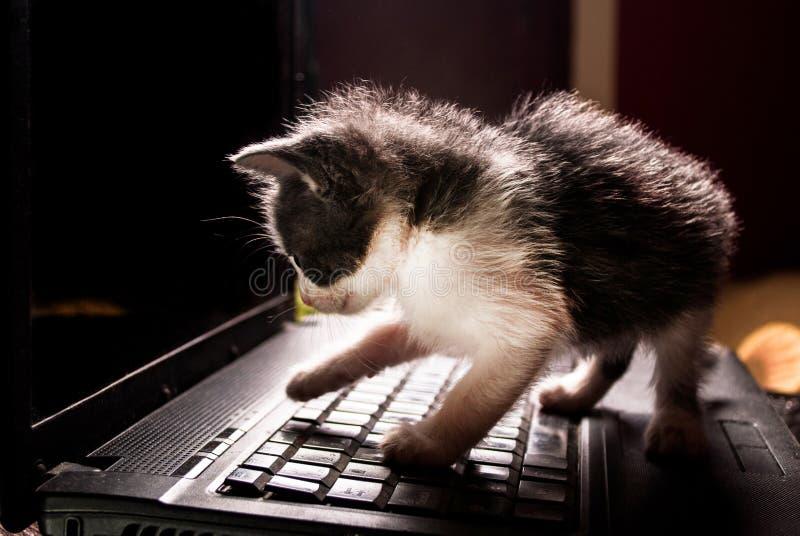 Kleiner Katzenhacker auf der Tastatur des Laptops die Knöpfe drückend stockbild