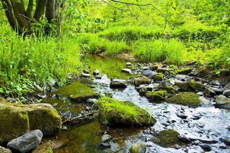 Kleiner langsam fließender Fluss im Bayern im Frühjahr stockfoto