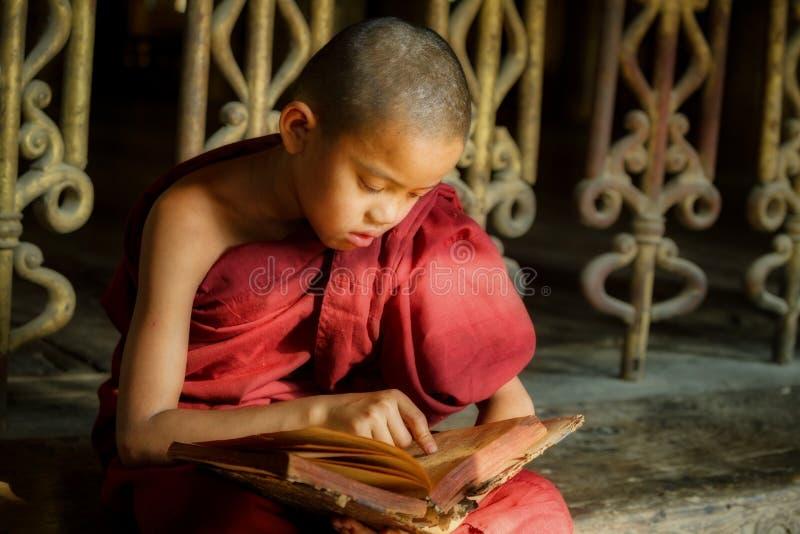 Kleiner Mönch BIRMAS oder Anfängermönch lesen das Buch im tem stockbild