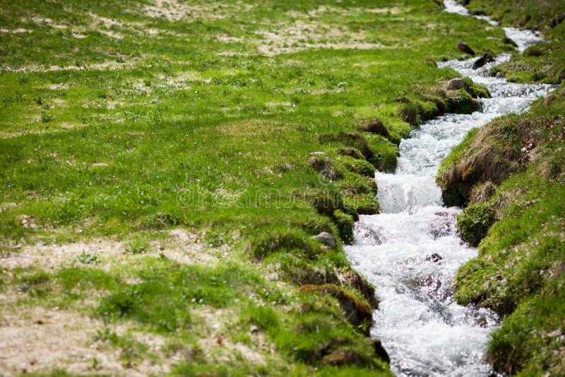 Kleiner Nebenfluss auf dem Gebiet stockbild