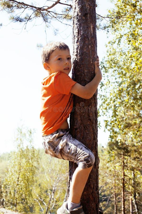 Kleiner netter wirklicher Junge, der auf Baumhöhe, Lebensstil im Freien c klettert lizenzfreies stockfoto