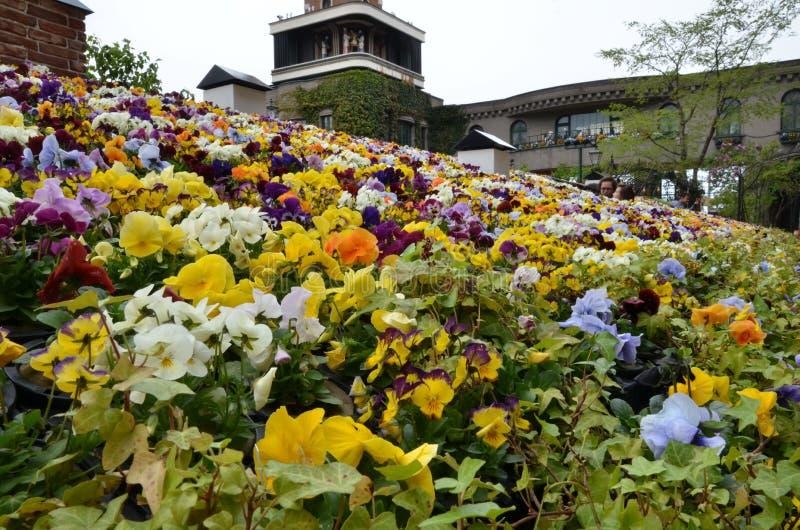 Kleiner Park der Gartenblume an der Schokoladenfabrik, Park Shiroi Koibito stockfotografie